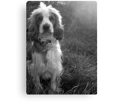 Gun Dog Canvas Print