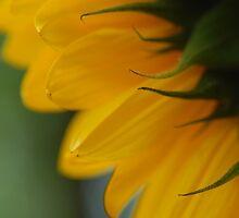 Hello Sun!! by vbk70