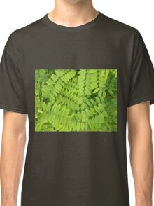 Bright green leaves and small acacia with dew drops Classic T-Shirt