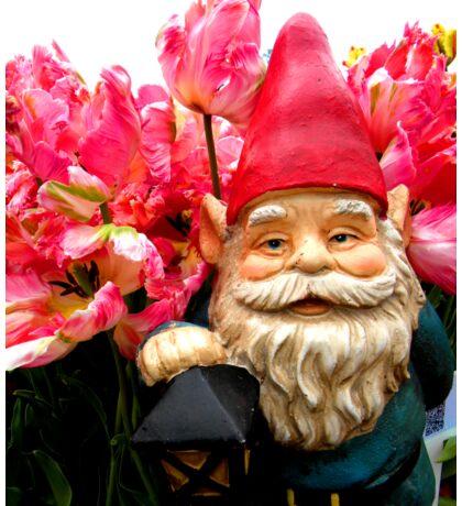 Tulip of Pink Gnome II Sticker
