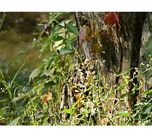 Shouting Stump Borders Thicket Photographic Print