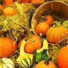 Fall Autumn Harvest - Pumpkins, Gourds &amp; Squash in Wooden Bushels &amp; Baskets by Chantal PhotoPix