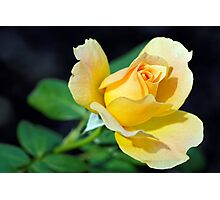 Yellow Perfection Photographic Print