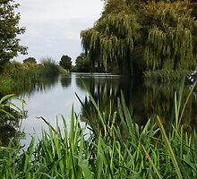 River Great Ouse weeping tree by gwebb
