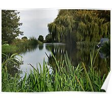 River Great Ouse weeping tree Poster