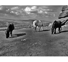 upon the moors Photographic Print
