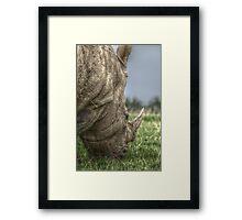 Rhino Hdr  Framed Print