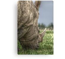 Rhino Hdr  Canvas Print