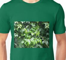 Dark green leaves of ivy creeping close-up Unisex T-Shirt