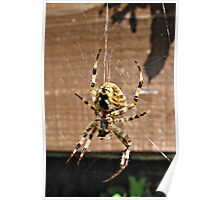 Spider, I don't like you. Poster