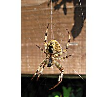Spider, I don't like you. Photographic Print