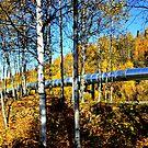 Trans Alaskan Pipeline  ~  Fairbanks, Alaska by lanebrain photography