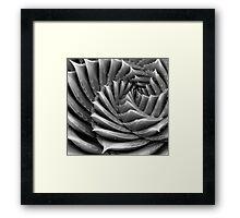 Spike and Spiral Framed Print