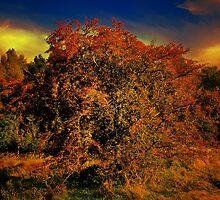 AUTUMN GLORY by leonie7