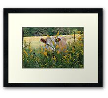 The Golden Cow In The Golden Pasture Framed Print