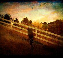 Homeward bound by Anne  McGinn