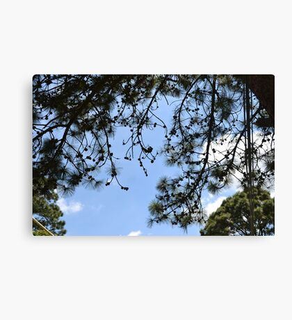 Wonderful trees Canvas Print