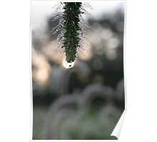 Sun Shining Through Morning Dew Poster
