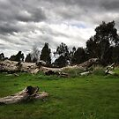 Natural Landscape - Melbourne by Joy Watson