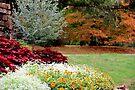 Autumn Garden by NatureGreeting Cards ©ccwri