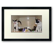Meet The Kittens Framed Print