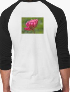 Backlit Fluffy Tulip Men's Baseball ¾ T-Shirt