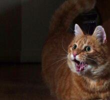 Excited cat Sticker