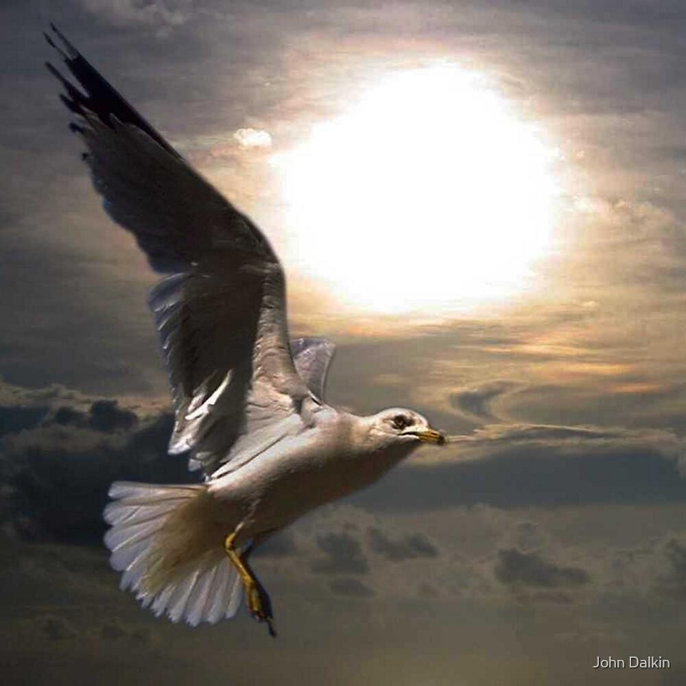 Flight by John Dalkin