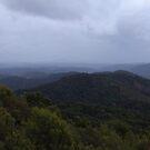 misty Tasmanian bush - Tarkine area by gaylene