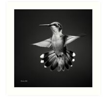 Black and White Hummingbird V Art Print
