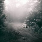 Into The Woods by Diogo Pereira