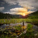 Wolf Meadow by Charles &amp; Patricia   Harkins ~ Picture Oregon