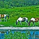 Wild Horses - Assateague Island, Virginia by michael6076
