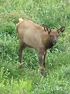 grazing in the grass by Christine Ford