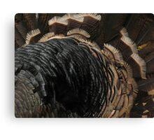 Turkey feathers Canvas Print