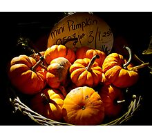 Fall Autumn Harvest Colors - Vignette Photo of Miniature Pumpkins in a Wicker Basket Photographic Print