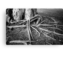 Root Spread Canvas Print