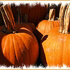 Fall Autumn Harvest - Large Pumpkins in a Row, Thankgiving Season by Chantal PhotoPix