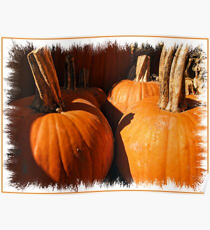 Fall Autumn Harvest - Large Pumpkins in a Row, Thankgiving Season Poster