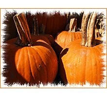Fall Autumn Harvest - Large Pumpkins in a Row, Thankgiving Season Photographic Print