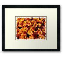 Fall Autumn Colors - Orange Chrysanthemums - Flowers in Sunlight Framed Print