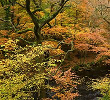 Autumn Colour by the River Teign, Dartmoor, England by Craig Joiner
