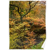 Autumn Colour by the River Teign, Dartmoor, England Poster