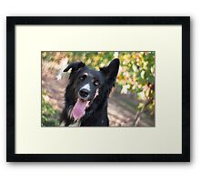 The star of the show Framed Print