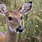 Mommy Deer by Scott Evers