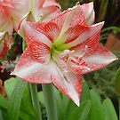 Amarilla flower. by Annabella
