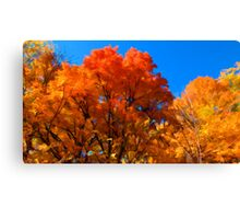 Red, Orange & Yellow Leaves on Fall Autumn Trees against a Blue Sky Canvas Print