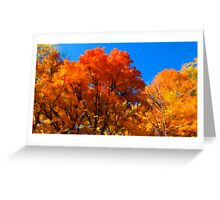 Red, Orange & Yellow Leaves on Fall Autumn Trees against a Blue Sky Greeting Card