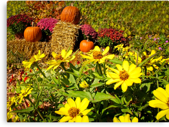 Orange Pumpkins on Hay Bales surrounded by Red Chrysanthemum Flowers & Yellow Daisies by Chantal PhotoPix
