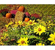Orange Pumpkins on Hay Bales surrounded by Red Chrysanthemum Flowers & Yellow Daisies Photographic Print